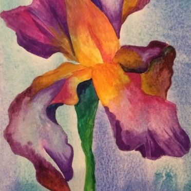 Watercolour painting of a purple, pink, yellow iris. One off original